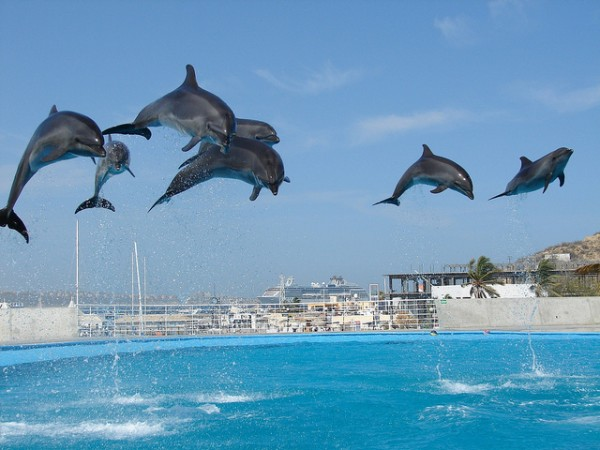 Dolphins in Cabo San Lucas